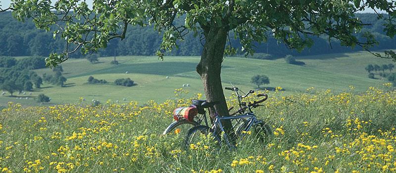 Radwege in und um Hornbach